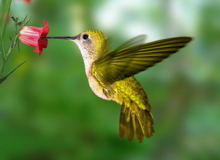 """Robot volador aprendió imitar el """"vuelo imposible"""" de los colibríes"""