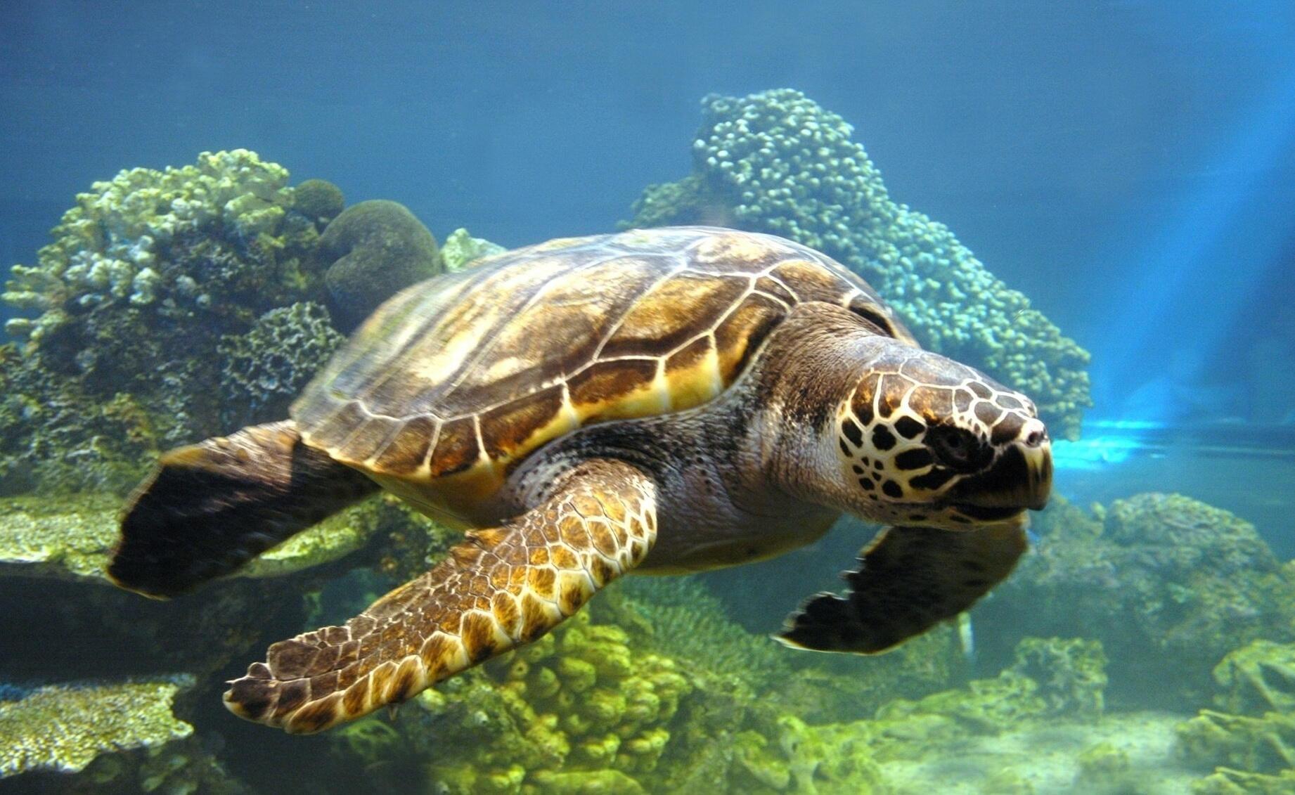 السلاحف البحرية أيقونة زيرة صيدا… لا لتعميم مفاهيم تستهدف حياتها!
