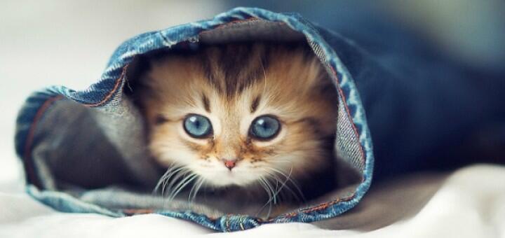 لدى القطة 32 عضلة في كل أذن تستطيع تحركها في كافة الإتجاهات