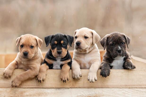 كيف تؤجّج الكلاب أزمة التغيّر المناخي؟