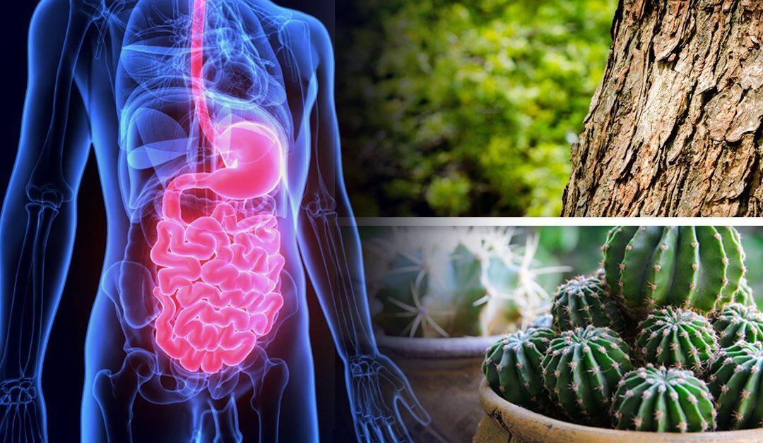 Cosas te podías comer y le hacen bien a tu organismo