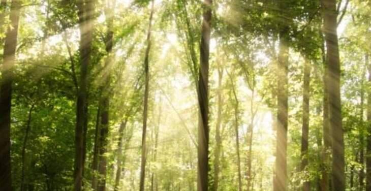 """عالم سويدي يصنع وقودا من """"الأشجار"""""""