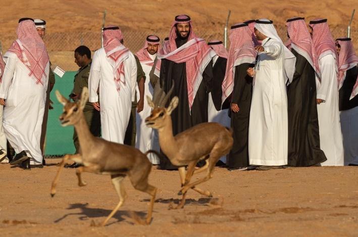 إطلاق محميّة شرعان الطبيعية في محافظة العلا في السعودية