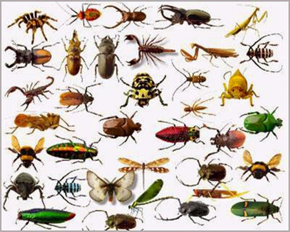 إنقراض سادس للحيوانات حالياً… والحشرات  تواجه الخطر الأكبر