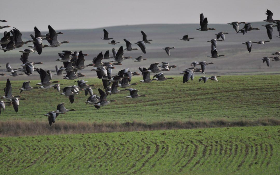 Sin separarse o chocar ,peces y  aves moven en grupos!!!