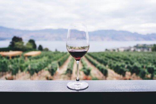 La producción de vino en la Península Ibérica, una de las más afectadas por el cambio climático a nivel mundial