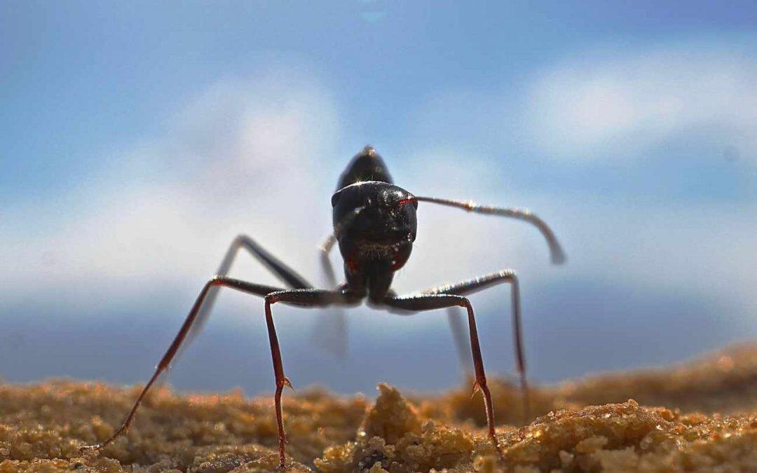 El robot más pequeño del mundo: menor a la cabeza de una hormiga