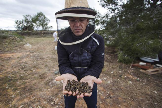 El pequeño asesino de abejas