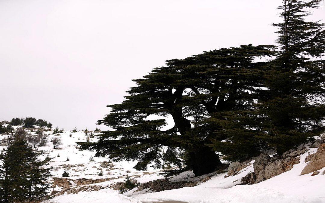محميات لبنان الطبيعية .. أين قانون حمايتها؟