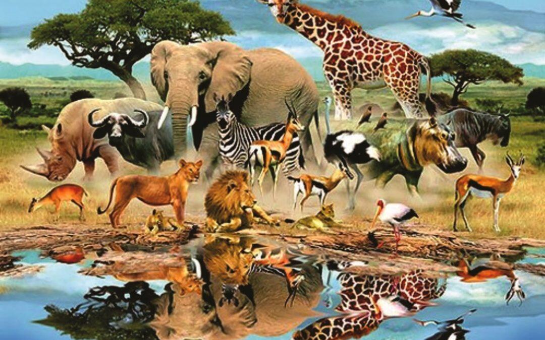 إنقراض سادس للحيوانات يجري على الأرض حالياً… والحشرات  تواجه الخطر الأكبر