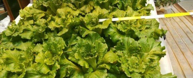 Una startup brasileña desarrolla tejas hidropónicas para el cultivo de plantas o alimentos