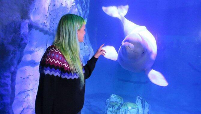 Las madres beluga enseñan a sus crías un 'nombre de familia'