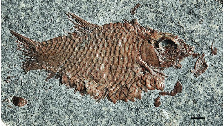أنواع جديدة من الأسماك في جبال الألب السويسرية