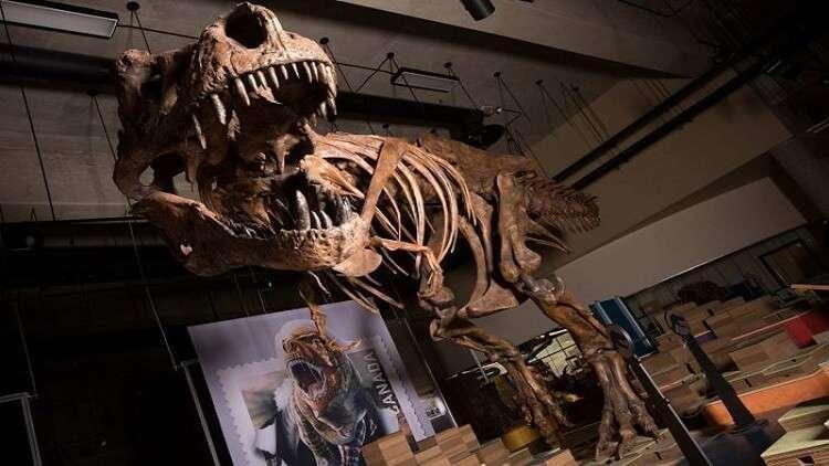 كشف النقاب عن أكبر وأقدم ديناصور في العالم
