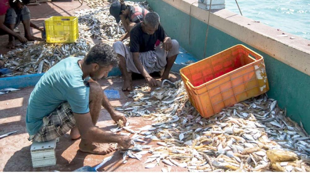 مخزون الأسماك في العالم بخطر!
