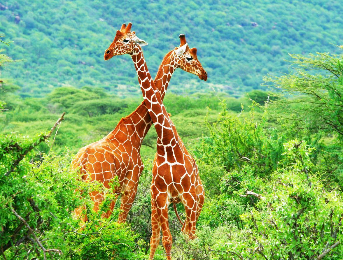 1.700 especies animales en riesgo de extinción   en 2070, por la actividad humana!!