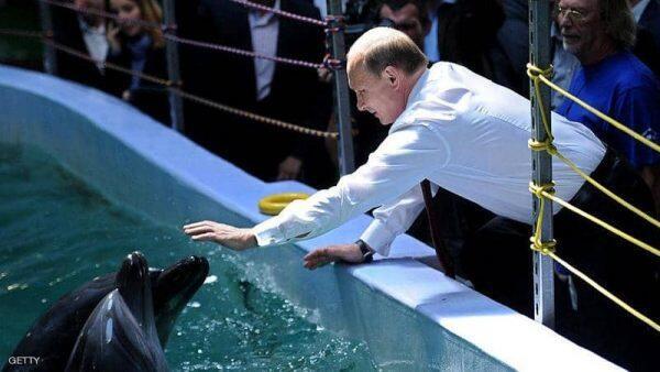 """الجيش الروسي يتعلم """"قوى نفسية خارقة"""" من الدلافين!"""
