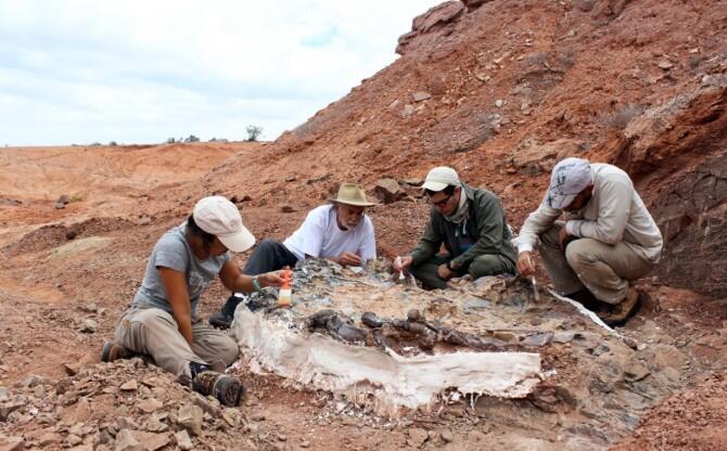 Descubren un extraordinario 'cementerio de animales' de 220 millones de años en San Juan