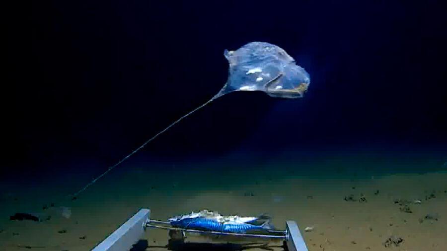 Hallan rara criatura marina