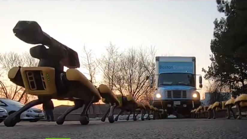 Los 'perros robóticos' de Boston Dynamics arrastran camiones