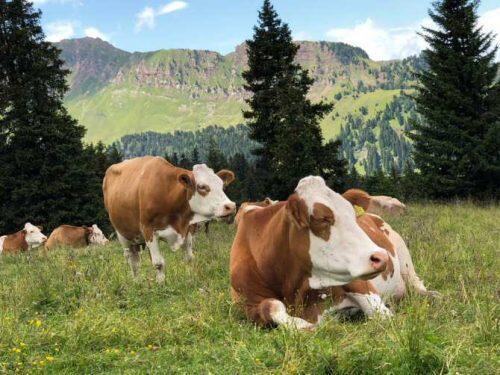 6961_una-mayor-diversidad-de-ganado-contribuye-al-funcionamiento-de-los-ecosistemas