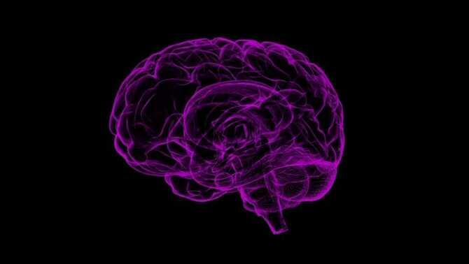 Estudio revela que el consumo de hongos alucinógenos aumenta las conexiones cerebrales