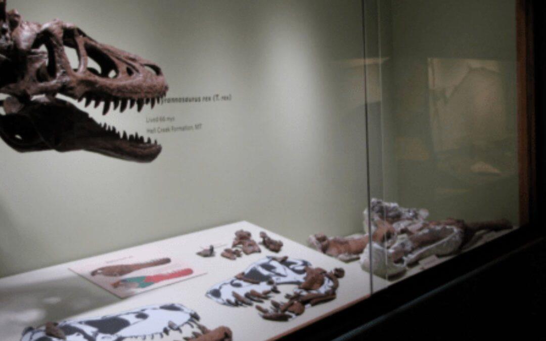 Subasta de un fósil de dinosaurio en eBay que causa indignación en la comunidad científica