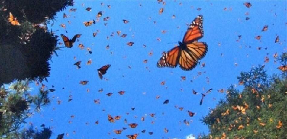 أسراب من الفراشات تحلق في مروج لبنان