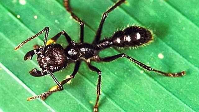 أخطر خمسة أنواع مِن الحشرات في العالم!