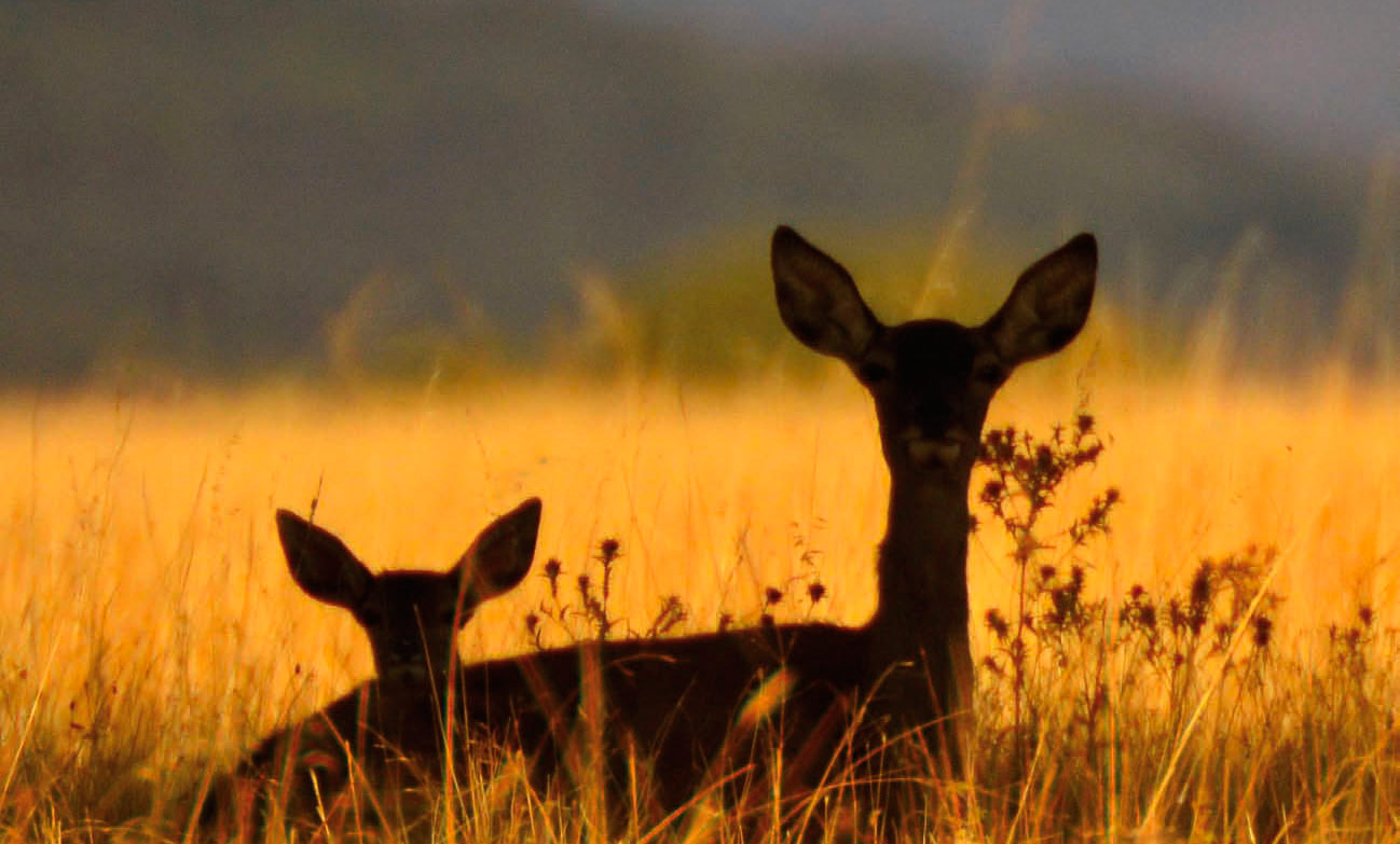 La biodiversidad está en riesgo de extinción!!