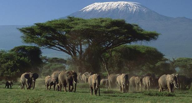 مليون نوع نباتي وحيواني مهدد بالانقراض