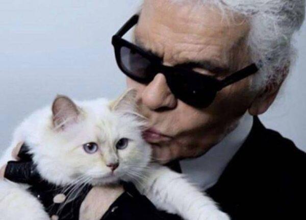 """قطة """"لاغرفيلد"""" قد ترث أكثر من 195 مليون دولار"""
