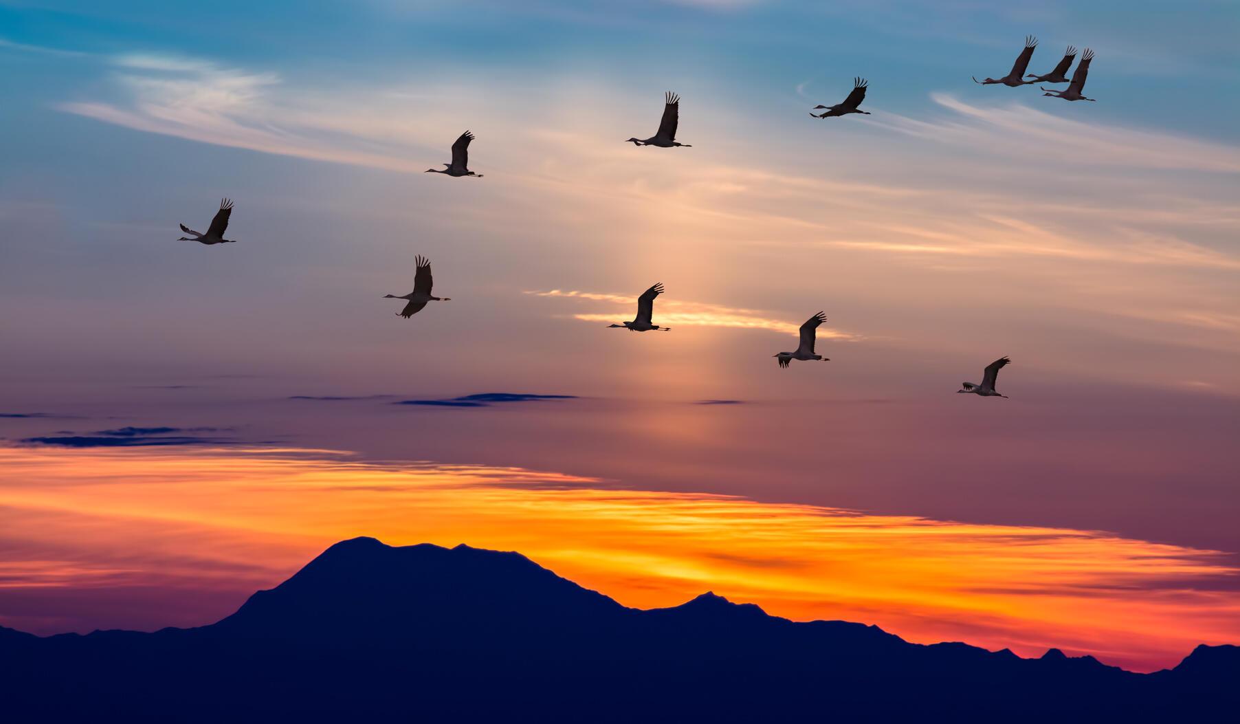 حماية الطيور المهاجرة ..القوانين ليست ترفاً !