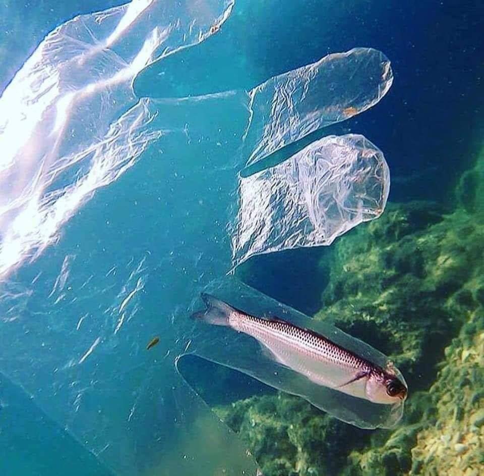 أكثر من 33 ألف قنينة بلاستيكية تلقى سنويا في البحر المتوسط