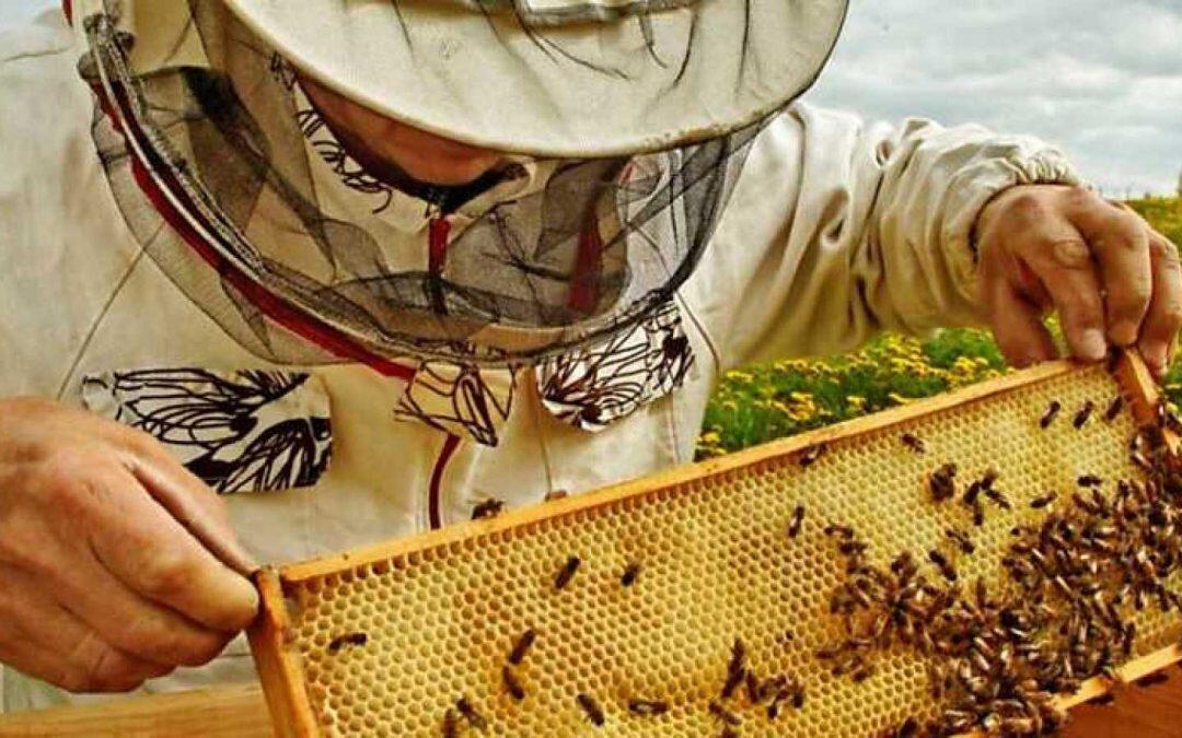 Las colonias de abejas en peligro!!
