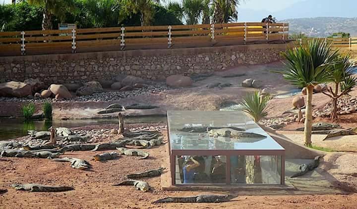 حديقة  للتماسيح والزواحف العملاقة في المغرب