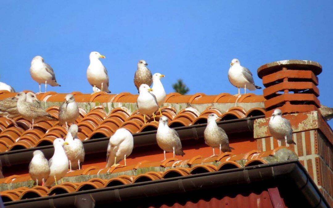 """Los pájaros """"urbanos"""", prefieren las  zonas pudientes!!"""