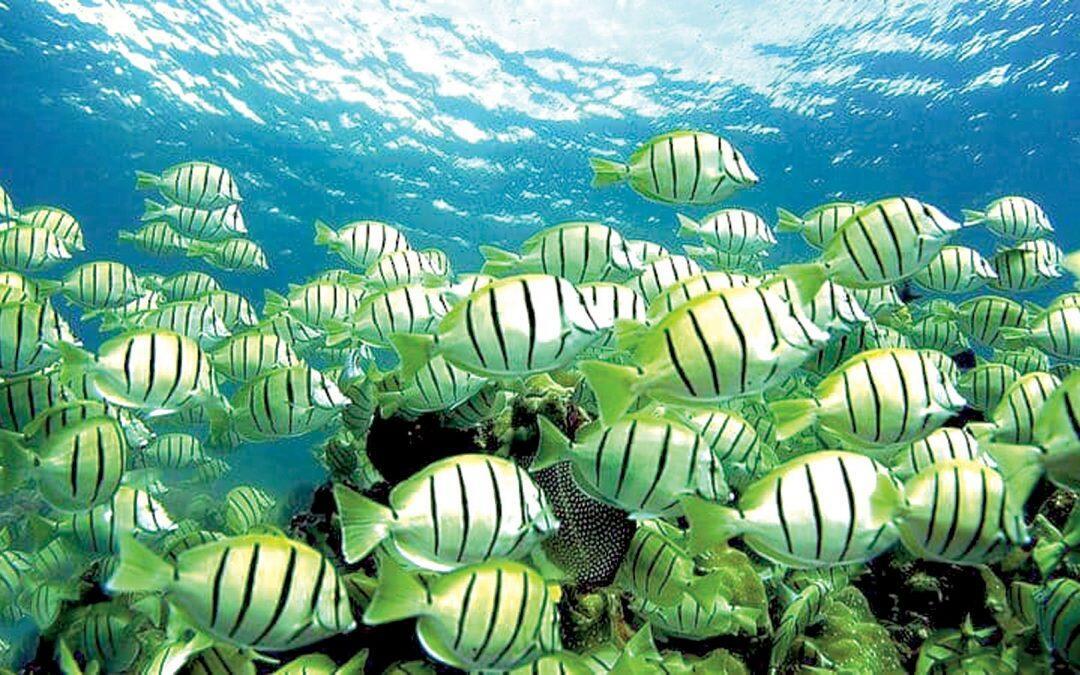 """استخدام الأسماك والحيوانات البحرية في """"التجسس"""""""