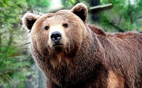 guia-de-los-osos-1080x671