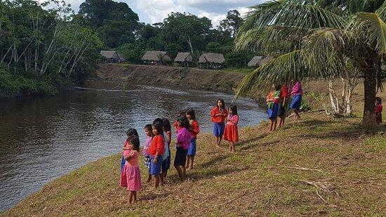 La fauna silvestre de la Amazonia, con altas concentraciones de plomo!!