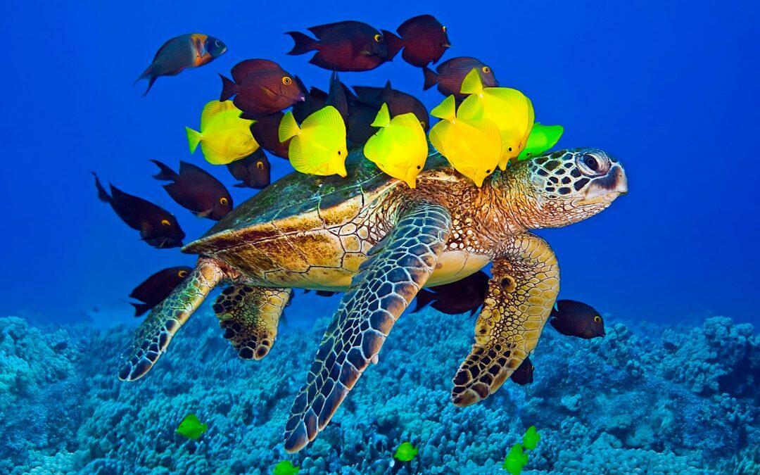 ¡Feliz dia mundial de las tortugas marinas!