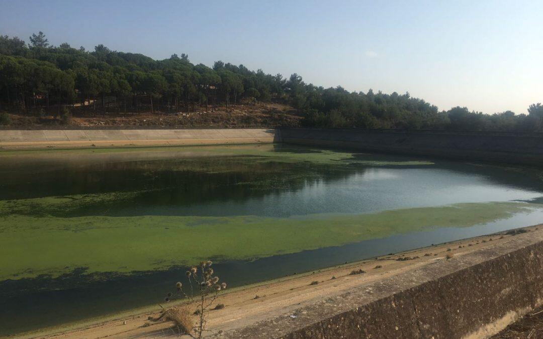 تلوث الليطاني والبحيرة..لعنة الـ 1100 مليار!