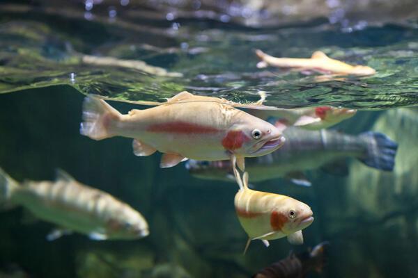 كيف تعيش الأسماك في الماء المالحة؟