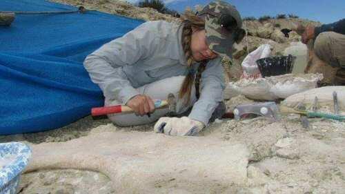 Descubren que hace 70 millones de años aves, lagartos y cocodrilos nidificaban en un mismo sitio