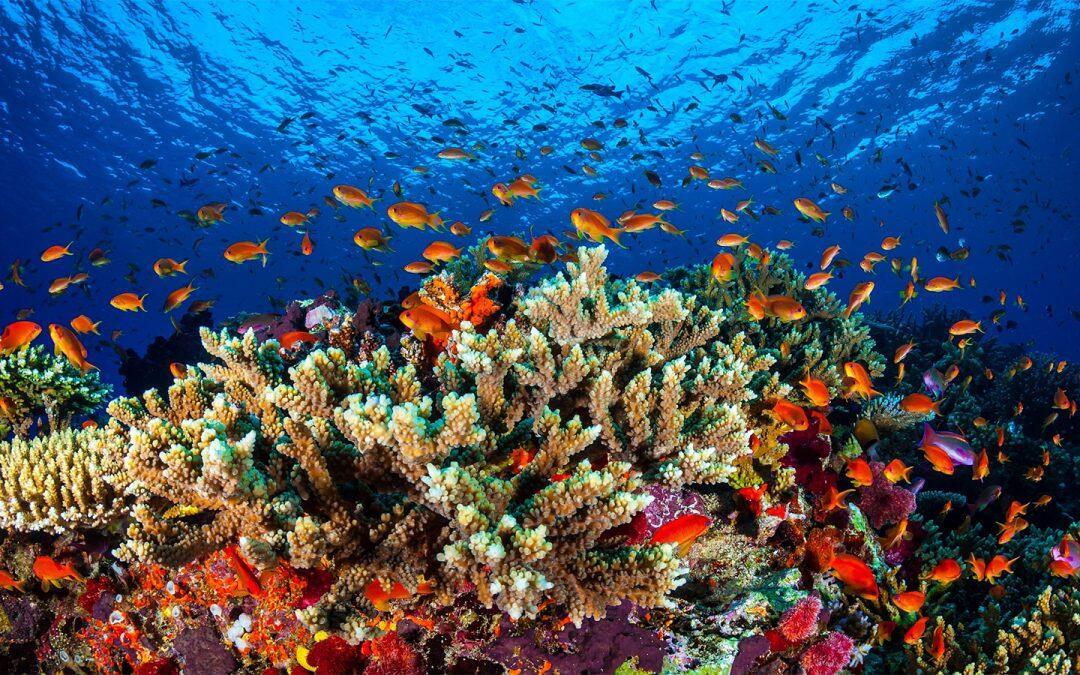 تجارب على شعاب مرجانية معملية في الحاجز المرجاني العظيم