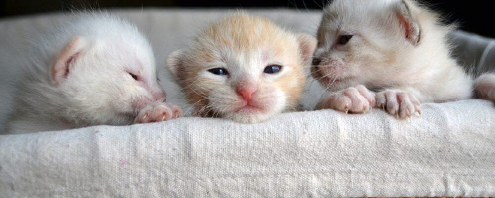القطط تواصل زيادة وزنها مع تقدم العمر!