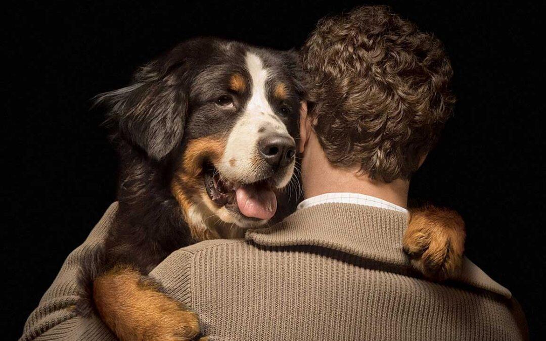 El Día Mundial del Perro, uno de los mejores amigos.
