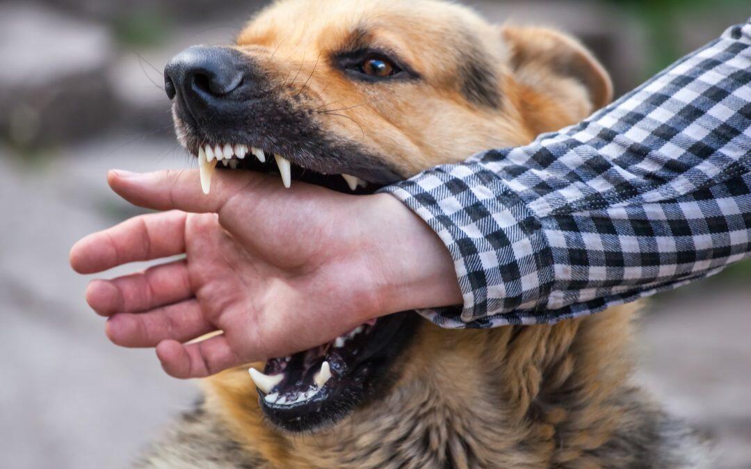 ارتفاع عدد الوفيات في لبنان والسبب عضّات كلاب مسعورة في المناطق النائية