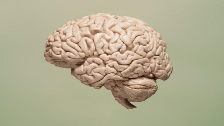 علماء يحققون إنجازا كبيرا في علاج شيخوخة الدماغ