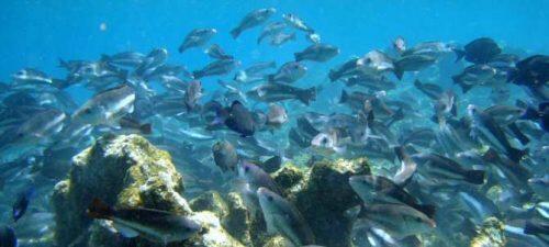 8431_los-microplasticos-en-el-pescado-y-los-mariscos